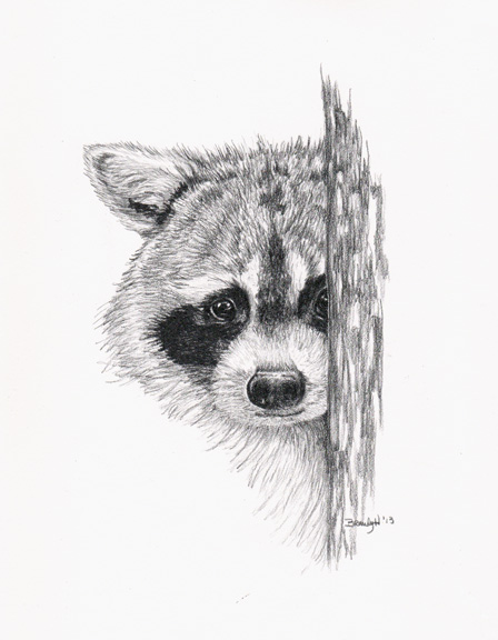Peeking Raccoon
