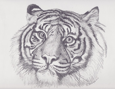 Tiger portrait02