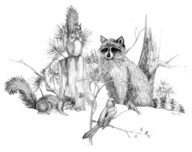 raccoon and friends tnl